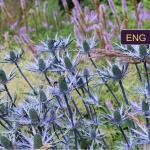 """ENGLISH """"Ekodizainas: naujas būdas analizuoti gamtą ir komponuoti augalus"""""""