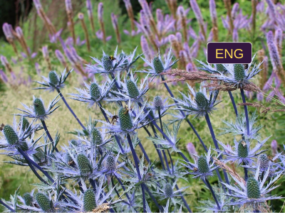 "ENGLISH ""Ecodesign: the new way to analyze wild and design urban plantings"""
